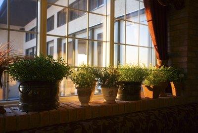 Window sill full of plants