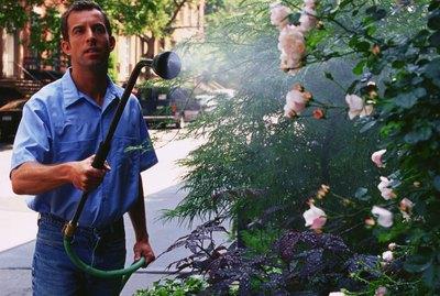 Man watering flower garden