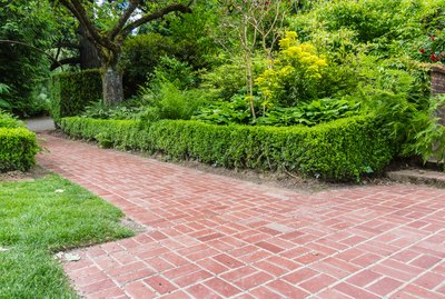 Green hedge borders a brick path in planted garden