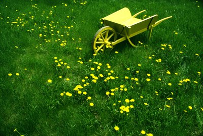 Decorative yellow wheelbarrow in overgrown lawn