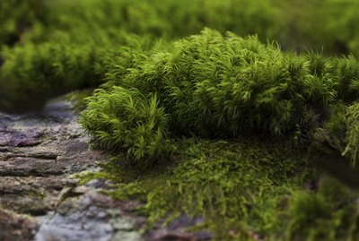 Moss by the way