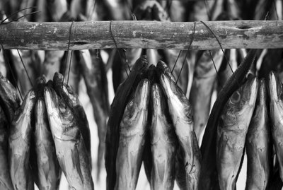Freshly caught fish hang out to dry in the sun