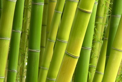 Peaceful Bamboo