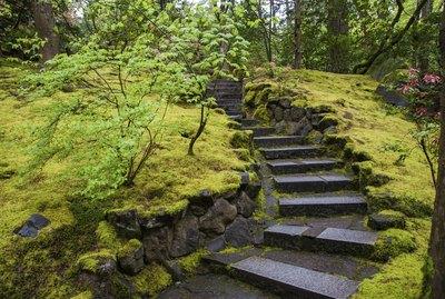 Stone stairway in a garden