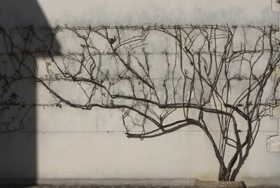 Tree growing on a wall
