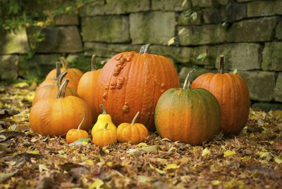 Group of various pumpkins on a stonewall