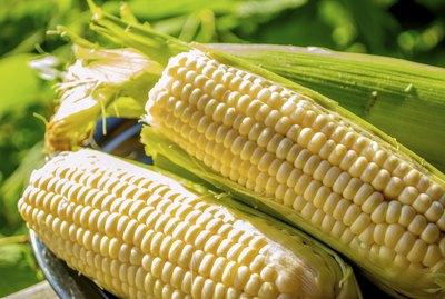 fresh plump and juicy corn on the cob