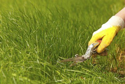"""""""Grass lawn trimming, garden shear and yellow glove"""""""