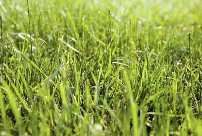 Close-up of grass