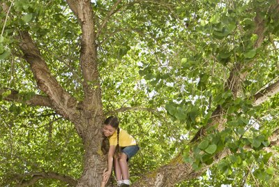 Girl and boy in tree