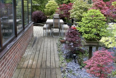 Image of bonsai trees in a garden next to conservatory