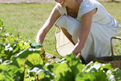 Woman in vegetable garden