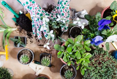Overhead shot of potted plants and gardening tools.