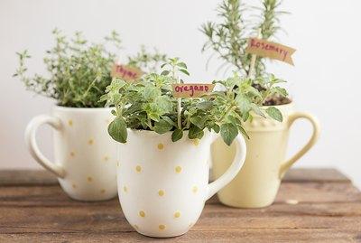 Three mug herb gardens