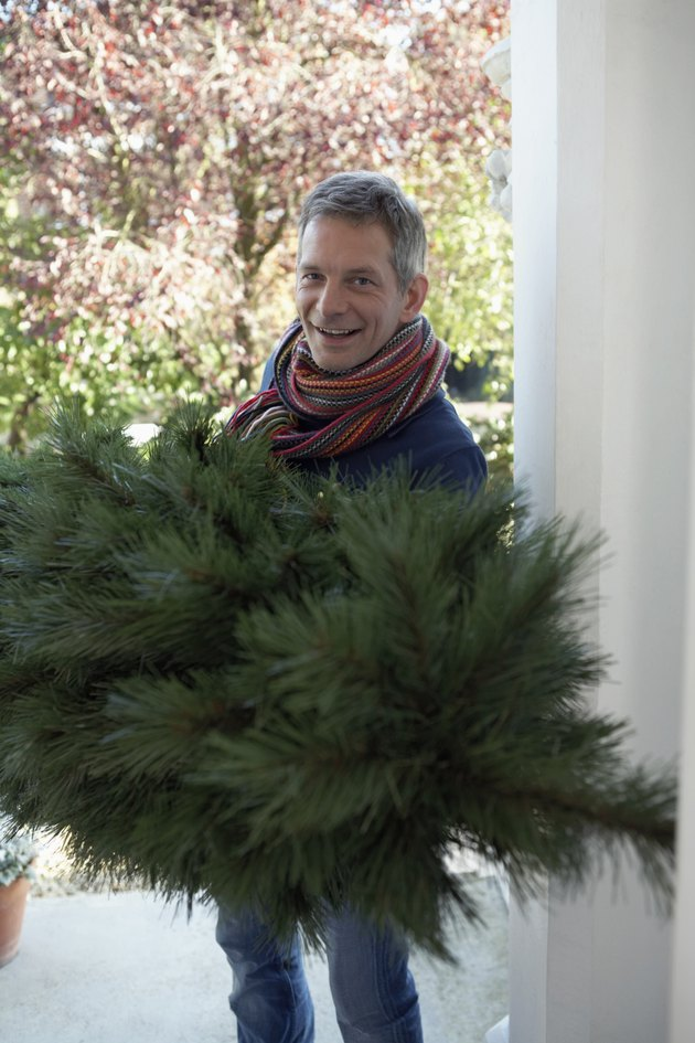 Man carrying fir tree into house, smiling, portrait