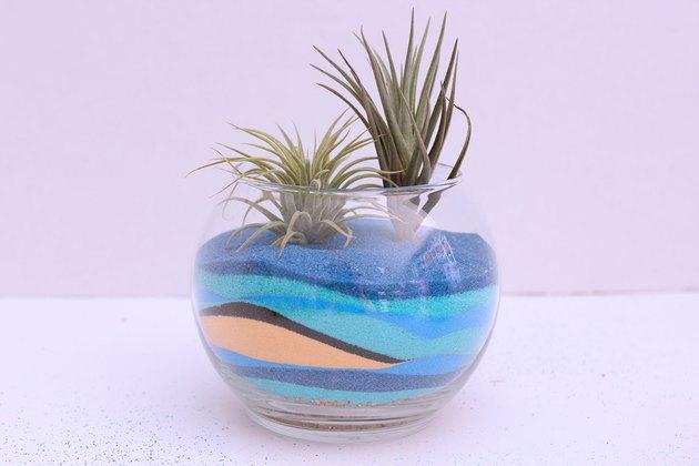 terrarium tillandsias