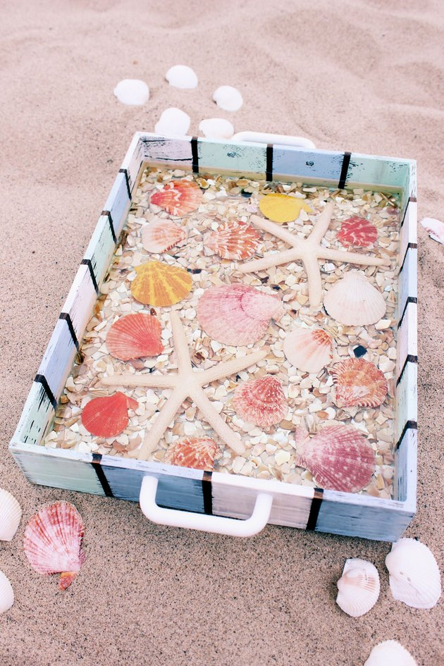 seashell tray