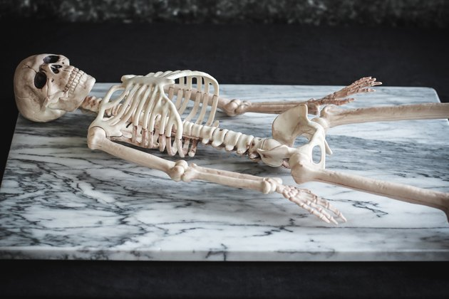 Skeleton placed on large platter