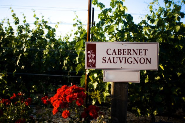 Cabernet Sauvignon sign at vineyard, Sonoma Valley, California