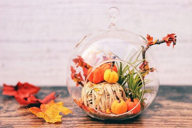autumn terrarium