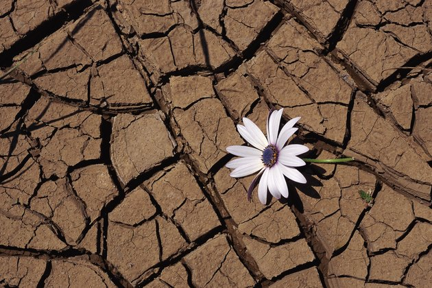 Flower and cracked mud