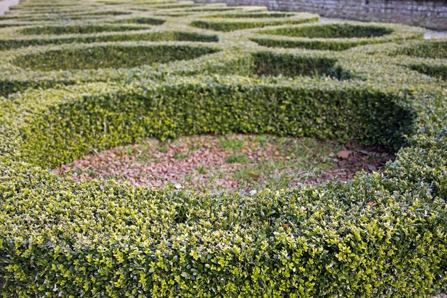 Box Hedge Circles