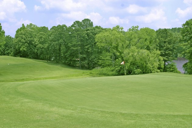 Golf course green