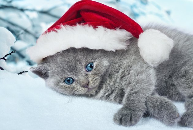 Little kitten wearing Santa's hat