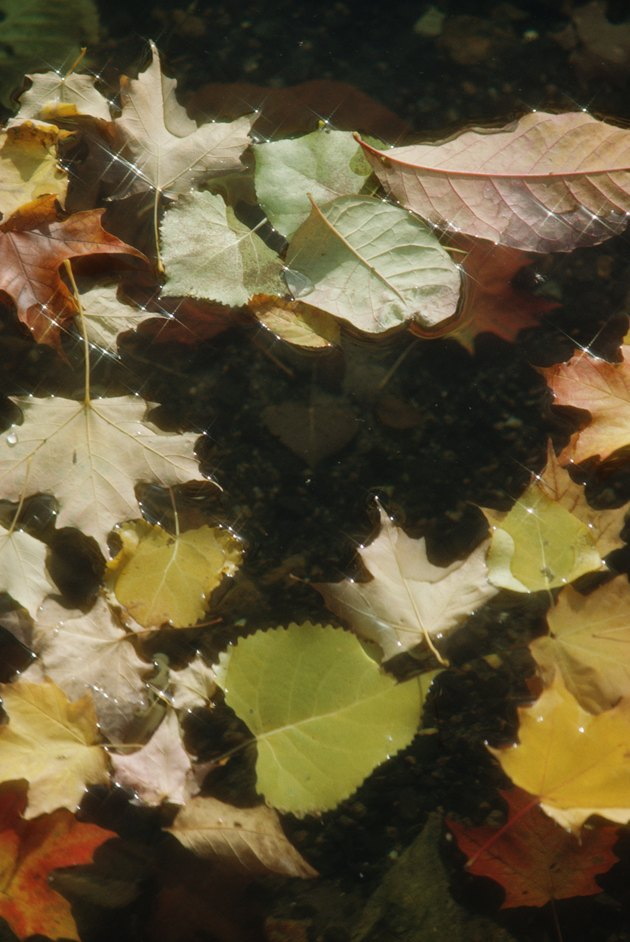 Fallen leaves floating on water in Quebec