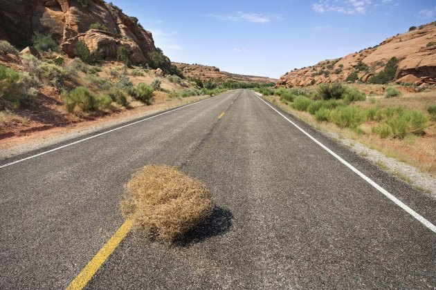 Desert highway with tumbleweed