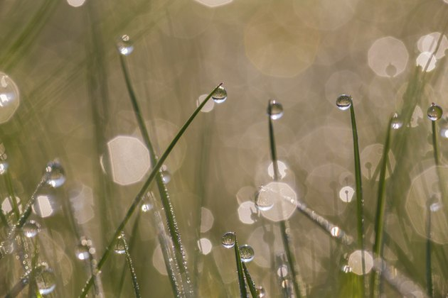 Fresh morning dew on spring grass