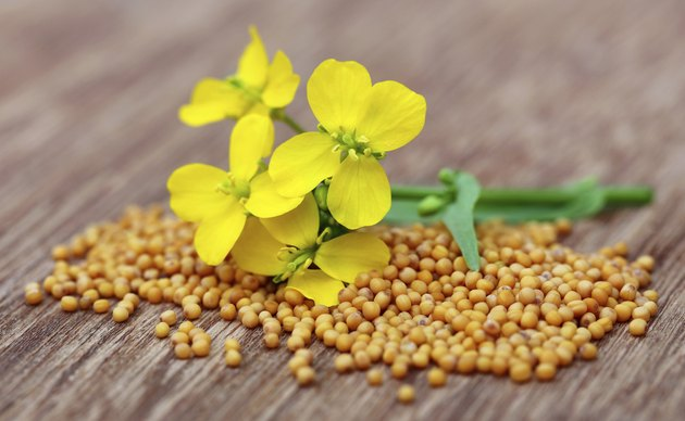 Mustard flowers with seeds