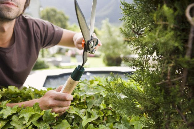 Man pruning bush
