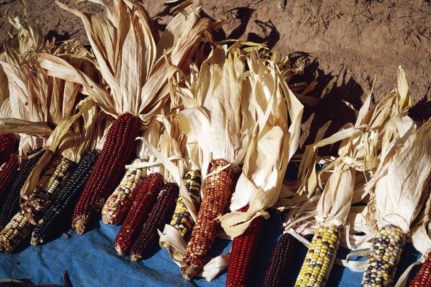 Dried colored corn