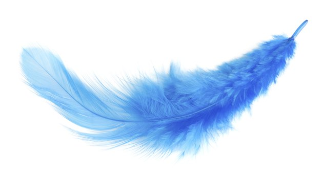 blue feather. isolated