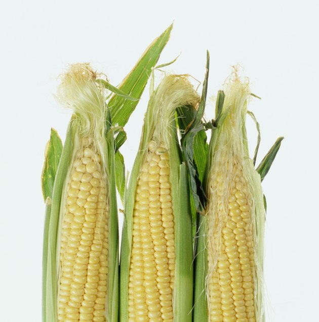 Ears of corn in husks, close-up
