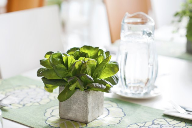 Basil bunch in stone decorative pot on the table