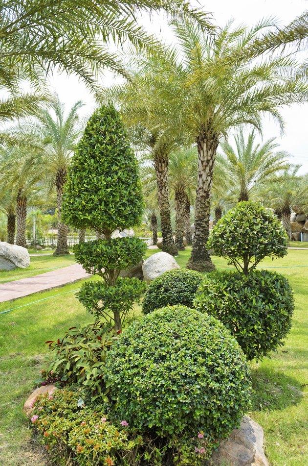 Dwarf shrubs