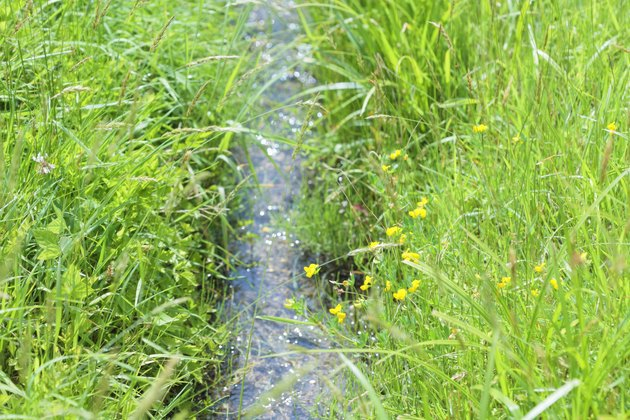 A small homemade stream through the yard can carry off excess water.