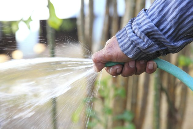 Holding a water rubber  tube. Watering. hose down.