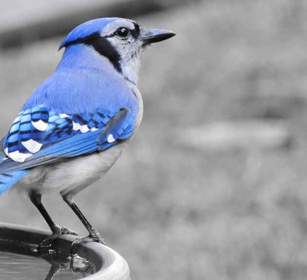 A nice shot of a thoughtful-looking bird.