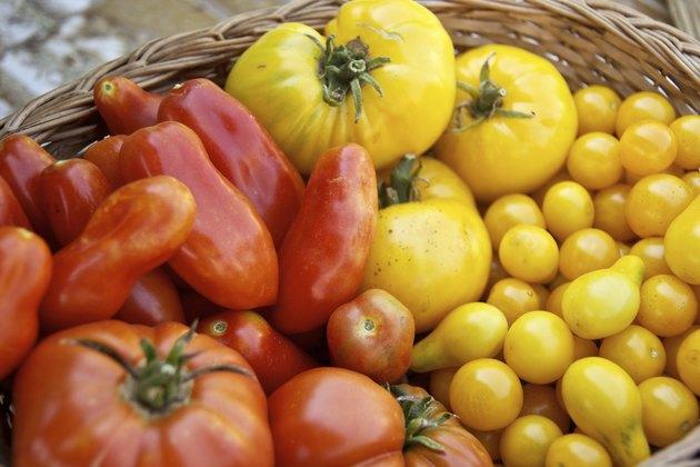 Basket full of fresh tomatoes