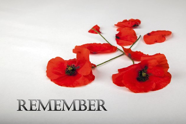 Poppies - for Remembrance Day, Remember