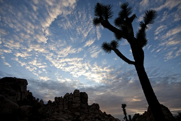 Patchy sky, rocky outcropping, and a joshua tree