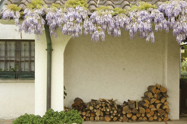 Firewood under a white porch with wisteria above