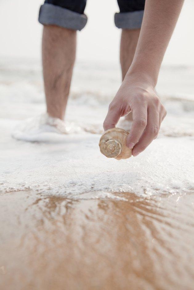Close up on hand holding seashell