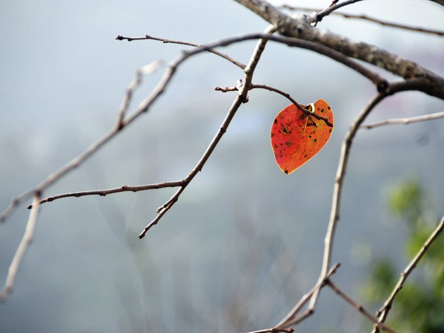 Lonely leaf in autumn
