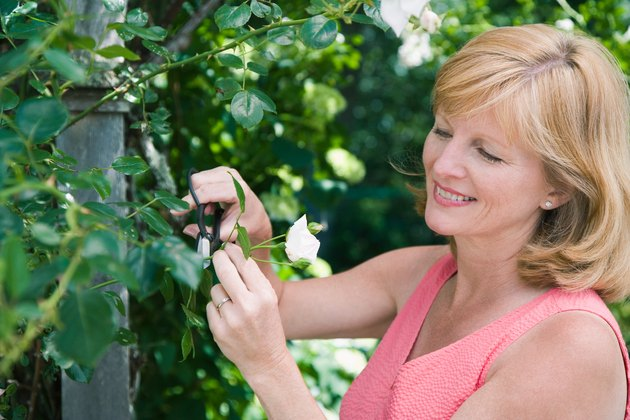 Smiling woman cutting flower outdoors