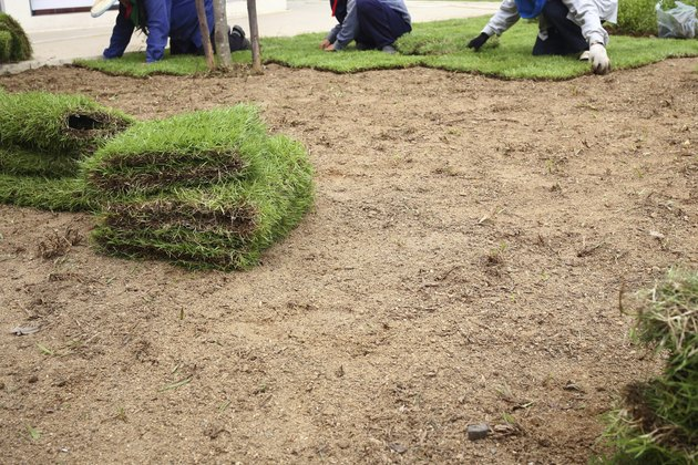 planting new sod grass in the garden