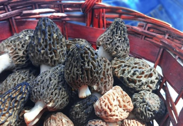 Morel's are distinctive mushrooms. They are prized by gourmet cooks, particularly for French cuisine.